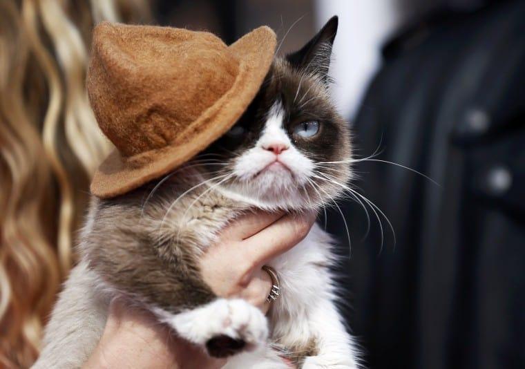 Gurmpy Cat őrület az MTV Movie Awardson. Ez kihat még a tőzsdére is :)