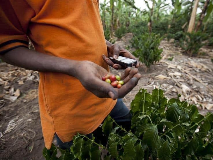 Az afrikai farmerek okostelefont kapnak