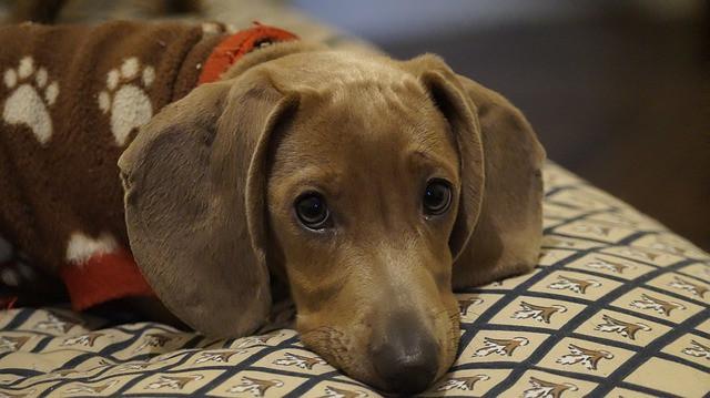 Indíts vállalkozást: 135. ötlet – kutya, macska apartman, óvoda + állateledel webshop